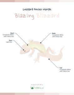 Leopard Gecko Morph: Blazing Blizzard - Ribbbit
