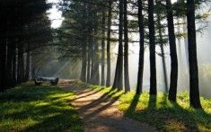 Researchers have been reporting on the stress-relieving benefits of shinrin-yoku, or forest bathing for years. Find out why!