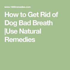 How to Get Rid of Dog Bad Breath |Use Natural Remedies
