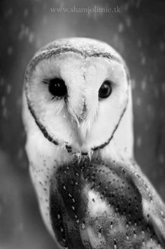 Owl Portraits 1