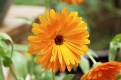 19 Plants That Repel Insects