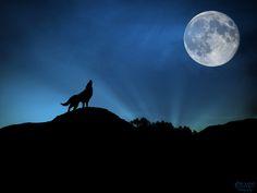 Los lobos fueron progresivamente domesticados por cazadores europeos hace más de 18.000 años y poco a poco se convirtieron en los actuales perros y llegaron a ser mascotas, según ha revelado un estudio del departamento de Ecología y Evolución de UCLA.  #Gruvasa #SabíasQué