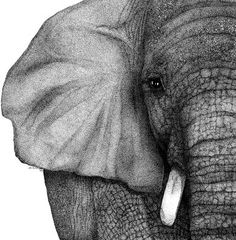 elephant drawing, I wish I could draw like this.