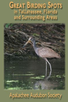 Great Birding Spots in Tallahassee Florida and Surrounding Areas