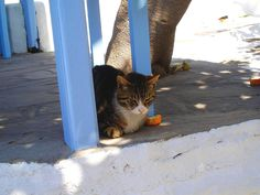 Kitty in Mykonos. | 31 Photos That Will Make You Want To Visit Greece Immediately