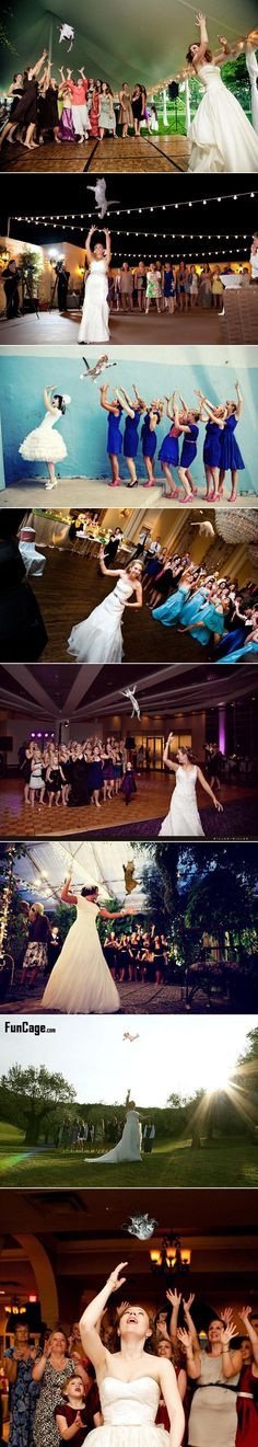 """OMG Heather and Ashley, this must be photoshopped for the Wedding!!!!!! Brides throwing cats instead of bouquets - I don't think Charles would appreciate this new """"meme"""" tradition!"""