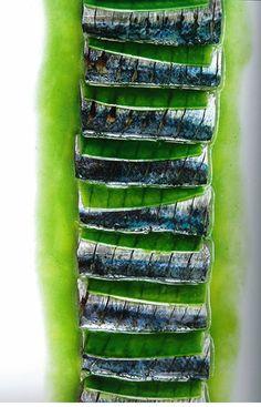 sardines au vert (Passédat)