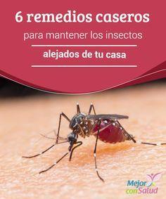 remedios caseros para mantener los insectos alejados de tu casa para evitar el uso de