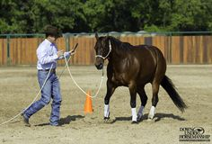 Groundwork Exercise #3: Backing Circles  Goal: To be able to back the horse in even circles with energy in his feet while he remains soft on the halter and respectful of your personal hula hoop space. You want to be able to just make a suggestion by marching toward the horse to get him to back away.  Learn more https://www.downunderhorsemanship.com/Store/Product/MEDIA/D/254/