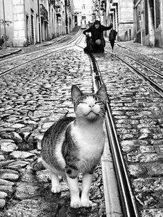 Lisbon street in black & white — Photo by Rui Palha on Flickr