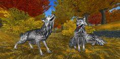 Wilki z Jorviku są teraz najpiękniejsze!