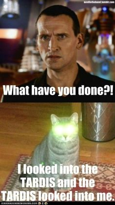 Doctor Who Funny cat pix LOL! i love doctor who. plz check out my doctor who board 😀 Artemis Fowl, Doctor Who Rose Tyler, Supernatural, Doctor Who Funny, Bad Wolf Doctor Who, Doctor Jokes, Tobias, Fandoms, Don't Blink