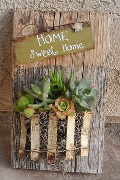 succulent garden on reclaimed barn wood. So simple and cute