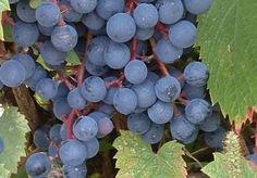 Lanaudière, découvrez les 7 vignobles de la région sur Passeport Monde, votre guide voyage
