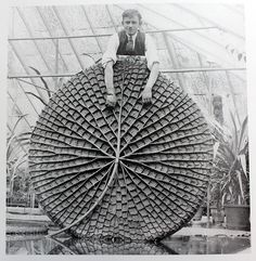 """Victoria amazonica has been a long-running inspiration even beyond its botanical """"wow"""" factor, not only for its structure but for its instant recognizability."""