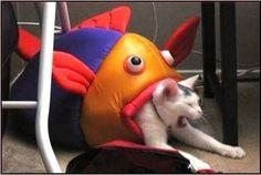 猫おもしろ画像 68