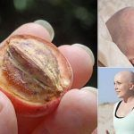 Cancer Cure: These 4 Plants Kill 75% Of Cancer Cells And Are Much More Effective Than Other Cancer Treatments