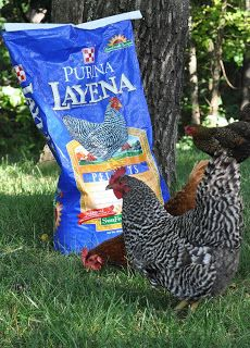 Chicken Feed Sacks Crafts