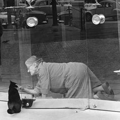 Sam Shaw, Paris cat