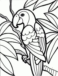 Parrot Birds Coloring Page