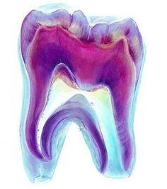 Supplyclinic.com  #Dentalart #Dentist #Art #tooth