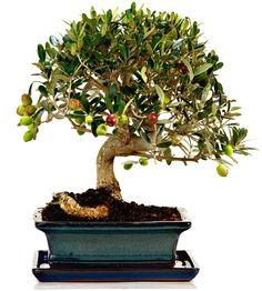 Bonsai: mantenimento e cura   Giardango. Alcuni preziosi consigli per mantenere al meglio e prendersi cura dei propri Bonsai