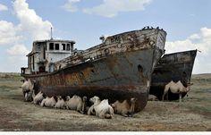 Wasserfahrzeuge, Yachten, Wracks, Segeln