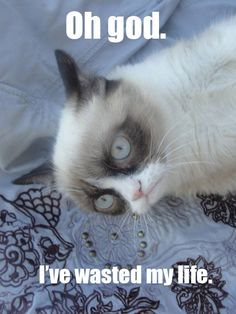 Another collection of funny Grumpy Cat memes - Mommy Has A Potty Mouth Grumpy Cat Quotes, Funny Grumpy Cat Memes, Grumpy Kitty, Funny Minion, Dog Memes, Funny Jokes, Baby Cats, Cats And Kittens, Neko