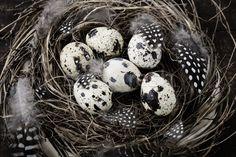 Stockfoto: Vogels · nest · eieren · easter