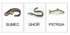 Sladkovodní ryby - kartičky – (Mujblog.info v3.1)