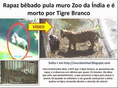 Mural Animal: Rapaz bêbado pula muro Zoo da Índia e é morto por ...