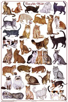 a262 cats of the world the domestic house cat felis - Tops type of Cats at Catsincare.com!