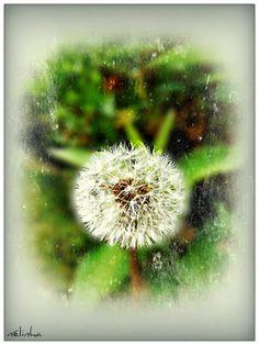 Mes Passions en toutes Saisons...: Mon Jardin....