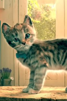 Perfect Image, Perfect Photo, Love Photos, Cool Pictures, Thats Not My, Pets, Awesome, Animals, Games For Boys