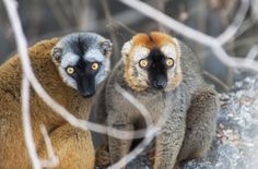 PHOTO GALLERY: Madagascar Animals