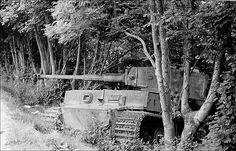 Tiger1 in hiding