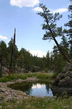 The Coconino National Forest is one of the most diverse National Forests in the country with landscapes ranging from the famous Red Rocks of Sedona to Ponderosa Pine Forests, to alpine tundra. Explore mountains and canyons, fish forest lakes and wade in lazy creeks and streams.