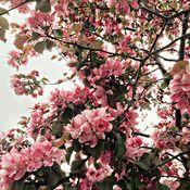 Blossom greetings card