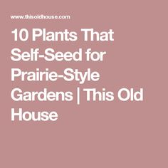 10 Plants That Self-Seed for Prairie-Style Gardens | This Old House