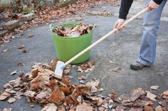 Get a head start on your leaf removal by clearing those pesky leaves from your front and back yard.