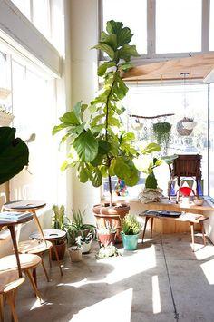大きな観葉植物を育てる: