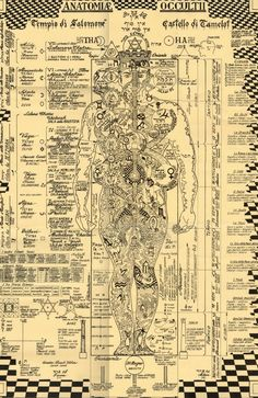Tech Discover Der okkulten Anatomie-Druck Kabbalah Alchemie Baum des symbols italian The Occult Anatomy Print - Wiccan Magick Witchcraft Rose Croix Kundalini Les Chakras Yoga Chakras Human Body Art Occult Art Tantra, Tarot, Kundalini, Les Chakras, Yoga Chakras, Human Body Art, Occult Art, The Occult, Book Of Shadows