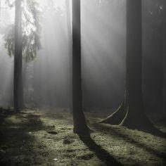 Forêt by Jürgen Heckel, Heckel photography via Behance