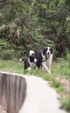 Help me please Funny Animal Photos, Cute Animal Videos, Cute Funny Animals, Cute Baby Animals, Funny Dogs, Cute Dogs, Beautiful Dogs, Animals Beautiful, Animals For Kids