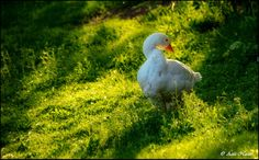 Aziz Nasuti Photography: I am beautiful :) I Am Beautiful, Bird, Photography, Animals, Photograph, Animales, Animaux, Birds, Fotografie