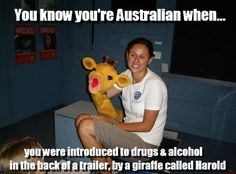 "Top Relatable Memes Australia These ""Top Relatable Memes Australia"" will make you laugh so hard. So scroll down and keep reading these ""Top Relatable Memes Australia"". Koala Meme, Funny Koala, Funny Animals, Australian Memes, Aussie Memes, Overly Attached Girlfriend, Meanwhile In Australia, Australia Funny, School Memes"