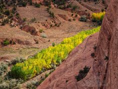 Band of Yellow: Cottonwoods in Canyon de Chelly, Arizona.  © 2013 Jim Peterson