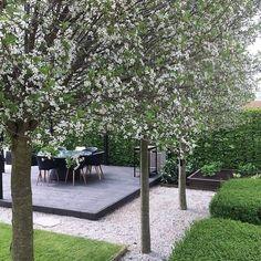 """517 gilla-markeringar, 7 kommentarer - My White Garden (@mywhitegarden) på Instagram: """"Jag har fått en hel del frågor om våra klotkörsbärsträd och här kommer en bild på dem när de…"""""""