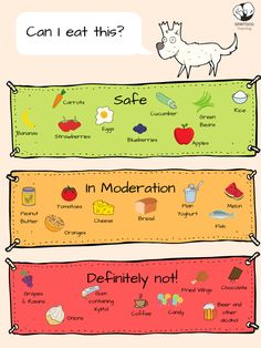 """Thinking - """"Can my dog eat banana, chocolate, candy, oranges, apples."""" This is your comprehensive list of what is safe food and what is not. Chien Goldendoodle, Cockapoo, Foods Dogs Can Eat, Frozen Dog Treats, Dog Facts, Dog Language, Puppy Care, Dog Care Tips, Dog Feeding"""