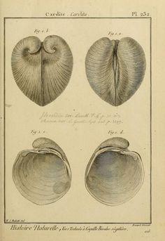 Encyclopédie Méthodique, ou Histoire Naturelle des Vers, c. 1792